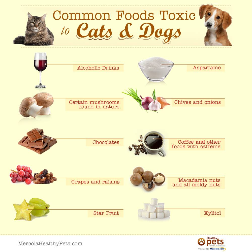 Foods That Can Poison Dogs